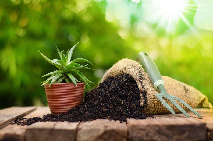 Nettoyer la terre d'une nouvelle plante