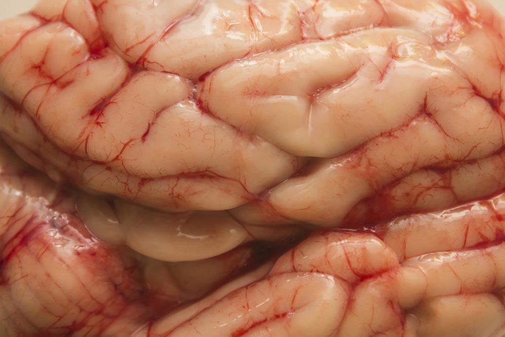 Mythe: nous n'utilisons que 10% de notre cerveau