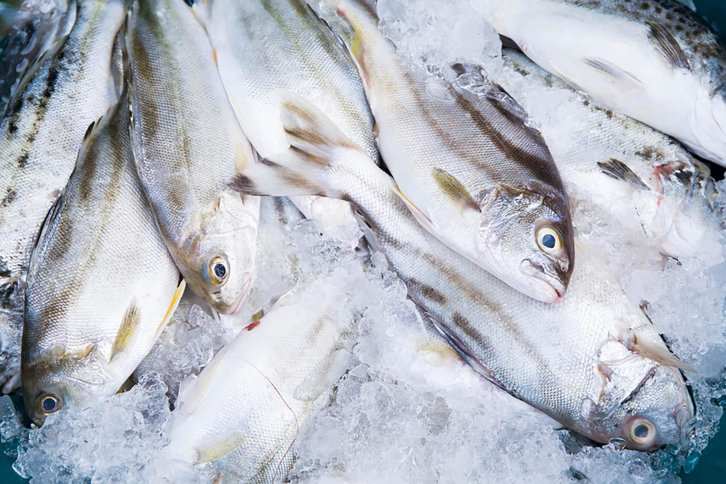 Image de poissons échoués, qui contiennent du zinc.