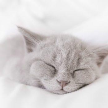 4 façons de rasséréner un chat déprimé