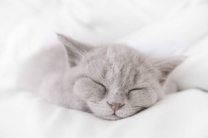 Mon chat, déprimé ?