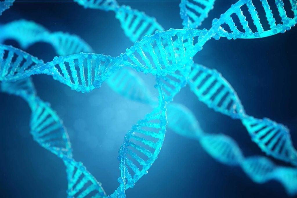 Mythe: les gènes déterminent la race