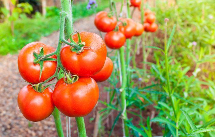 Les pesticides sur les aliments peuvent tuer