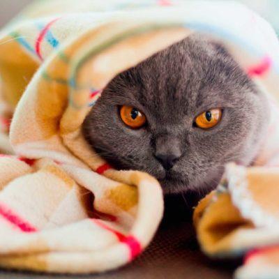 Les chats n'aiment pas qu'on les habille.
