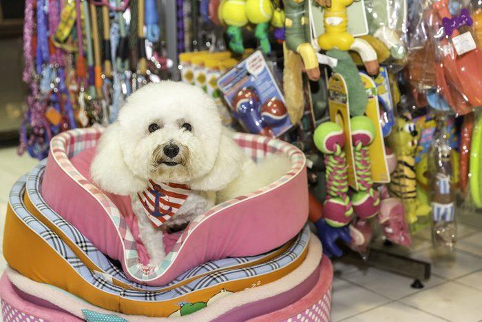 Jeune chien dans un coussin neuf à l'animalerie.