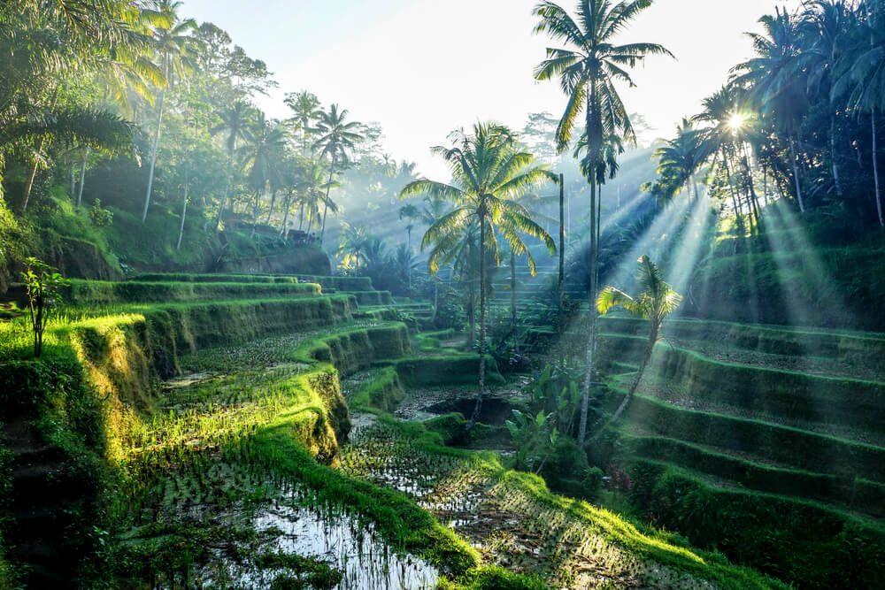 Rendez visite à un guérisseur de Bali