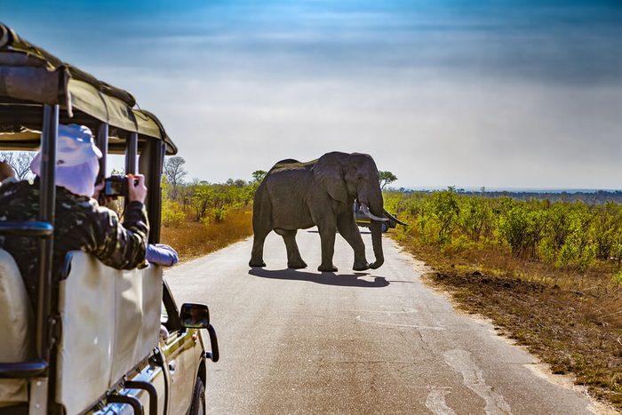 Explorez la faune au Kruger National Park