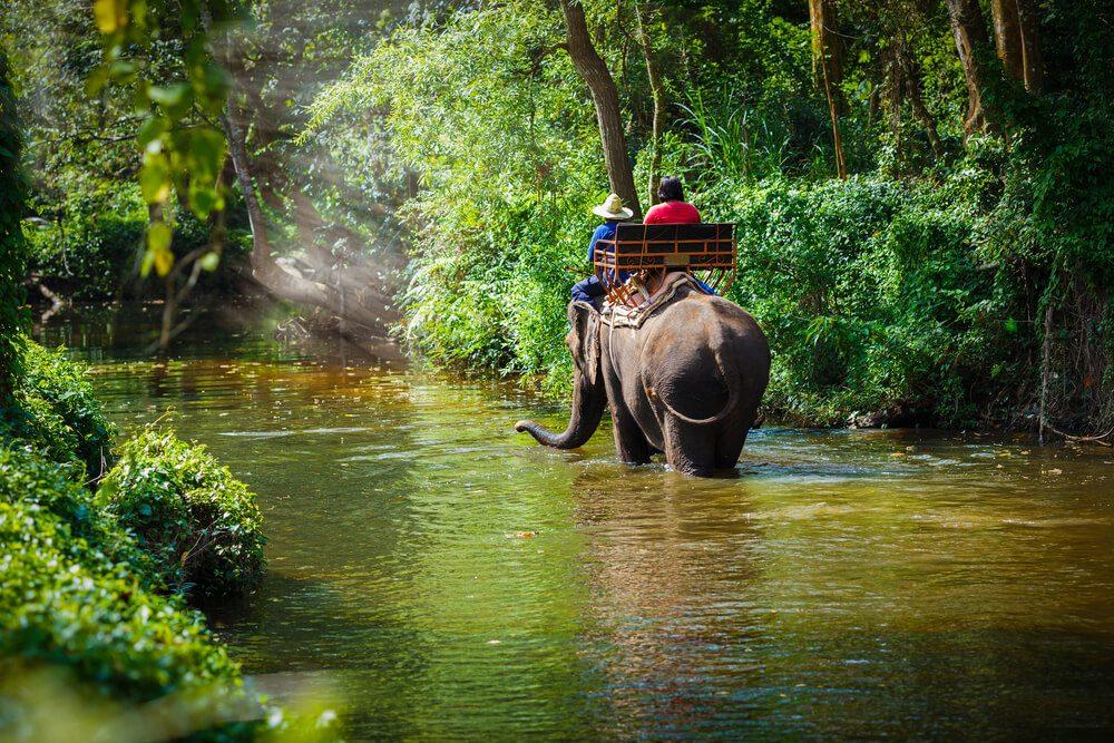 Cuisinez des plats thaïs et mêlez-vous aux éléphants à Chiang Mai