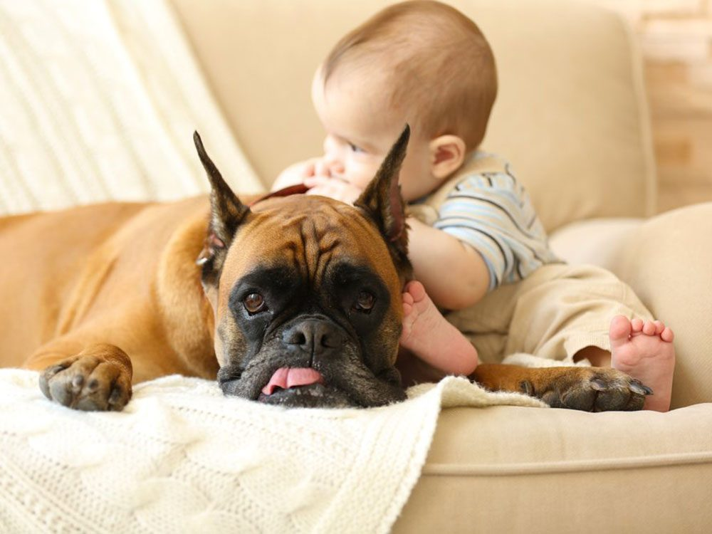 Votre chien sait que les enfants sont vulnérables.