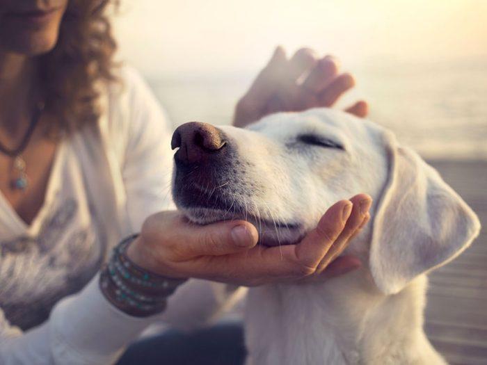 Votre chien sait si vous êtes une personne généreuse (ou pas!).