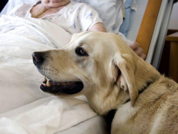 Votre chien sait si vous avez le cancer.