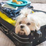 13 secrets que votre chien connaît sur vous