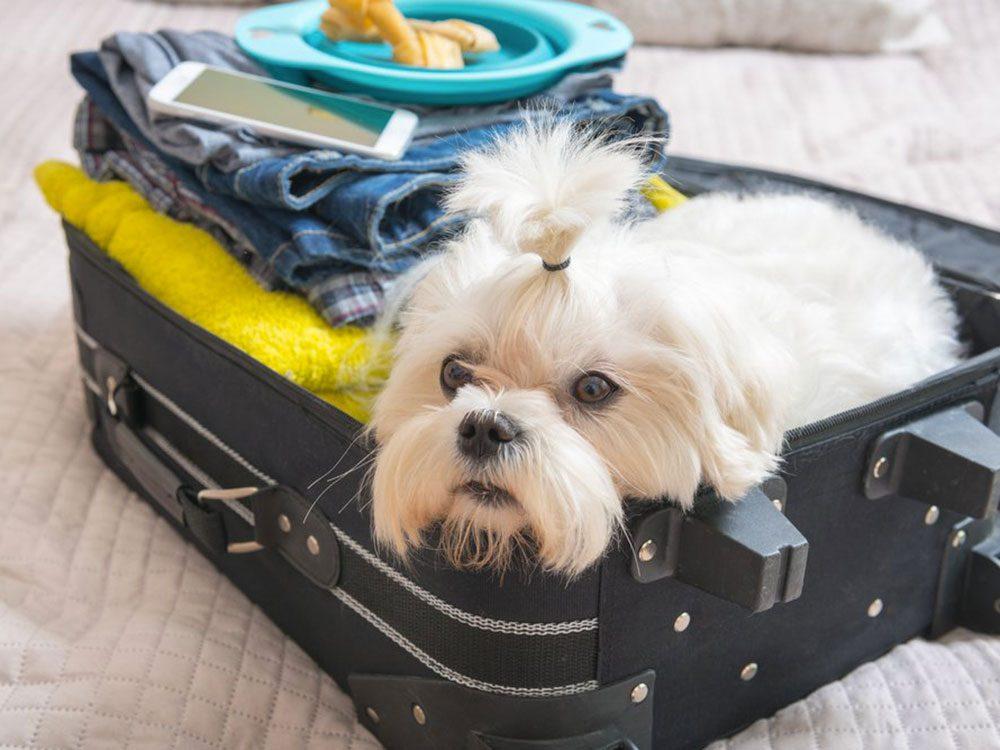 Votre chien sait quand vous partez en voyage.