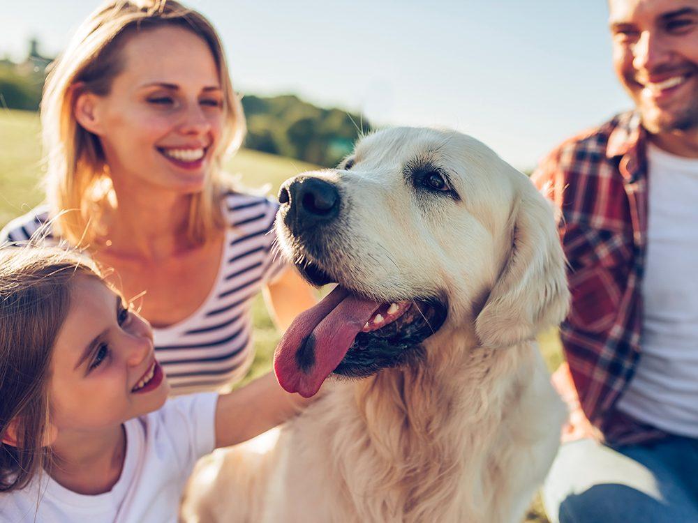Découvrez les meilleurs chiens pour votre famille.