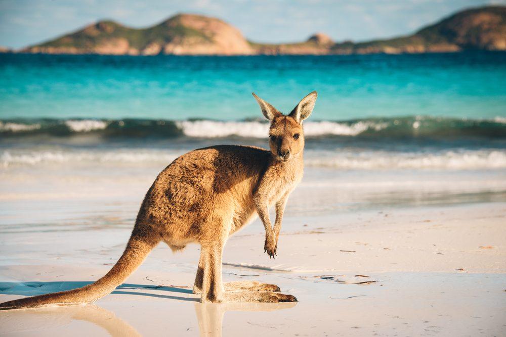 Le prix de la loi la plus absurde pour l'Australie!