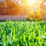15 trucs faciles pour entretenir sa pelouse
