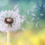 10 trucs pour désamorcer les allergies du printemps