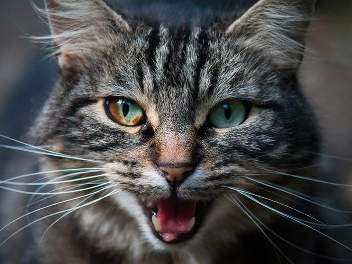 Voici pourquoi votre chat miaule sans arrêt.