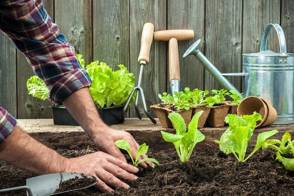 Espacez vos fruits et légumes et suivez bien les directives