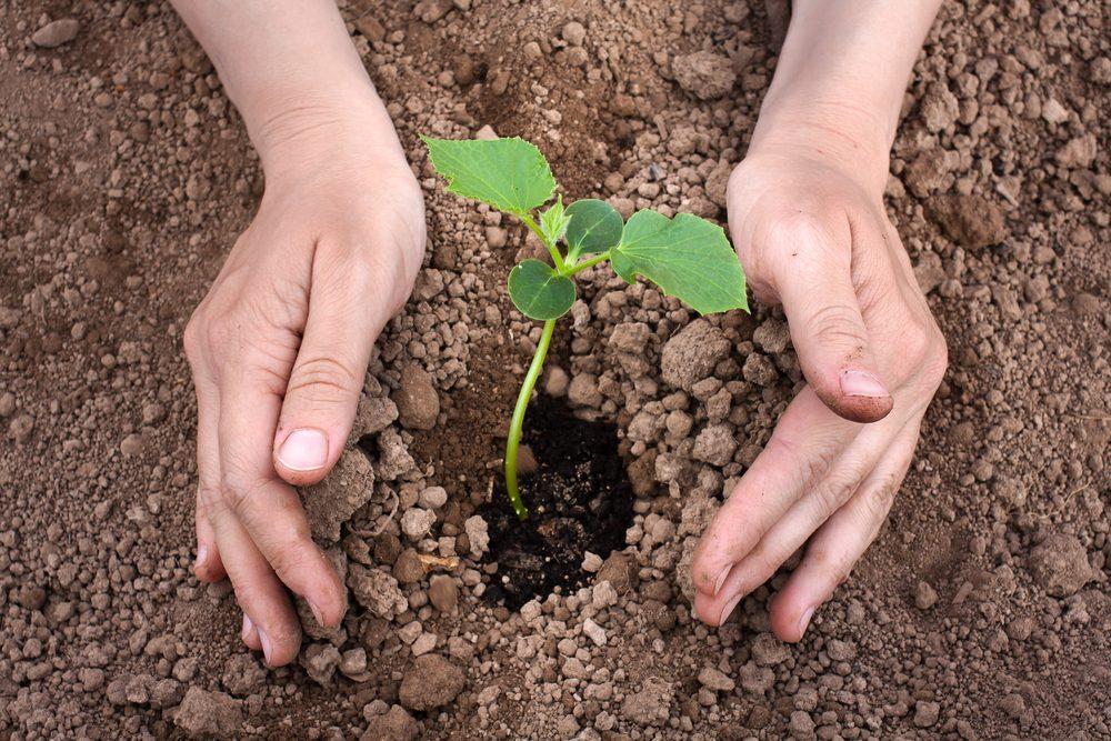 Le bon moment pour planter les semis