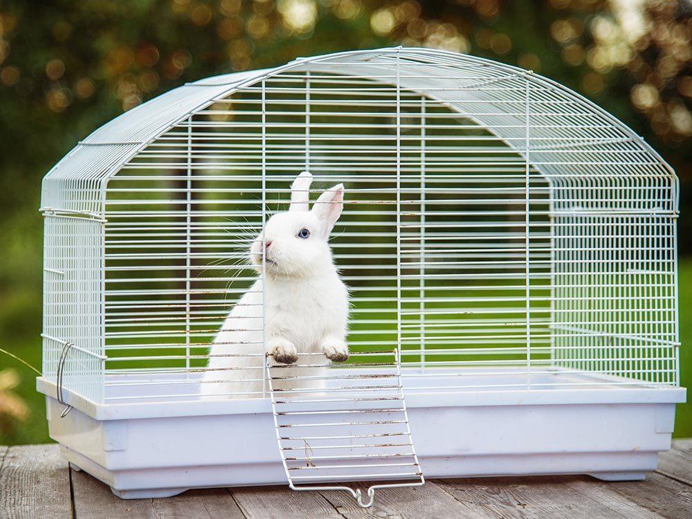 Comment s'occuper d'un lapin: nettoyez sa cage régulièrement.