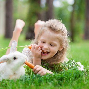 4 règles d'or pour prendre soin d'un lapin