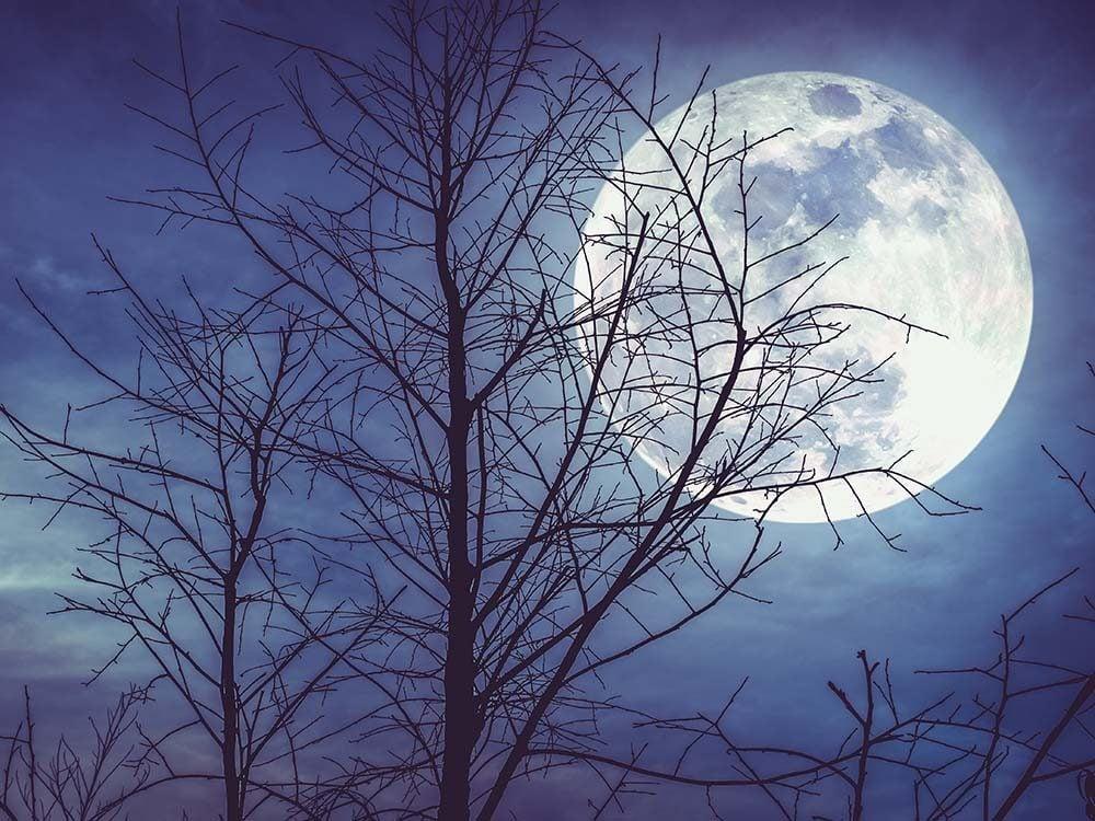 la-lune-d-ou-vient-la-lune