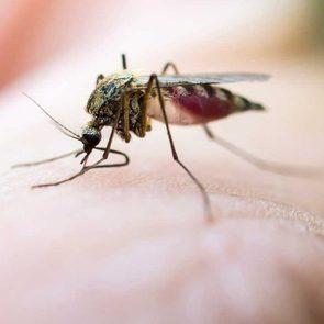 Virus de Nil occidental: attention aux piqûres en fin d'été.