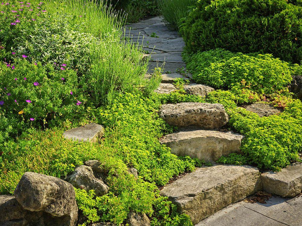 La pelouse peut être remplacée par un couvre-sol.