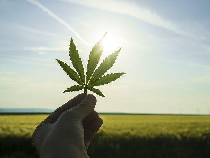 Usage médical du cannabis: les choix de variétés et les modes de consommation.