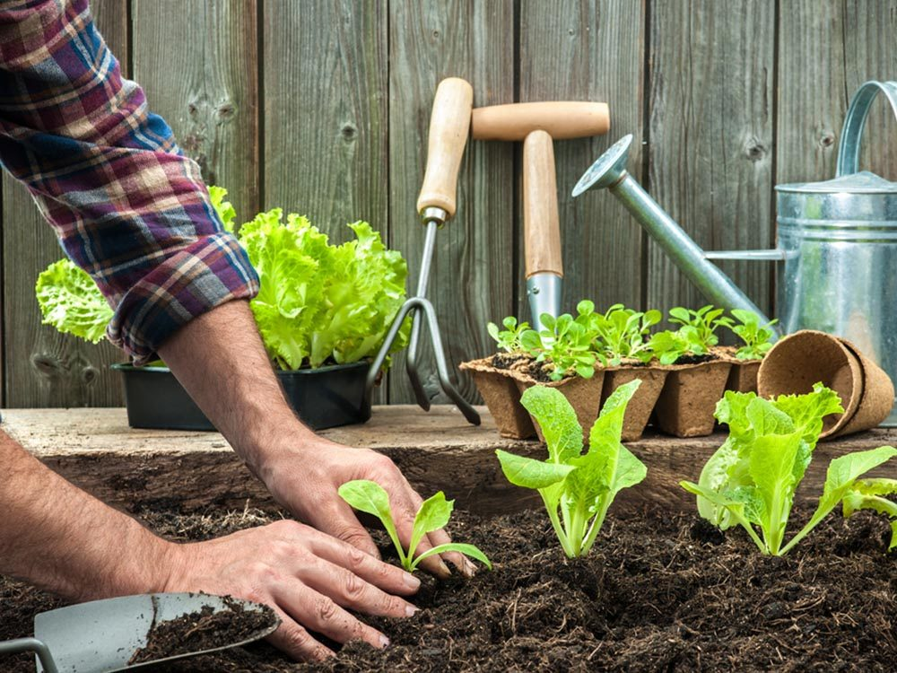 Activités estivales: cultivez vos propres légumes.