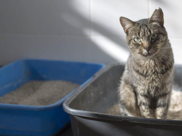 Un chat malade peut négliger sa litière.