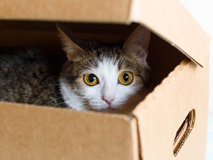 Un chat malade peut se cacher davantage.