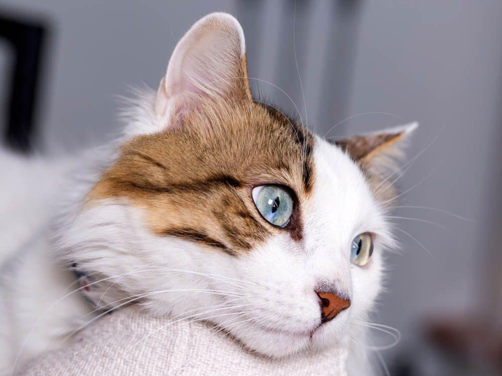 Un chat malade peut devenir sénile.