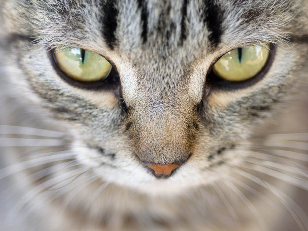 chat-malade-yeux
