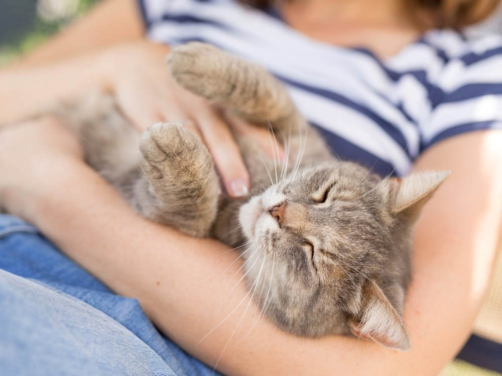 Les signes de déprime chez le chat: un brusque changement de comportement affectif.