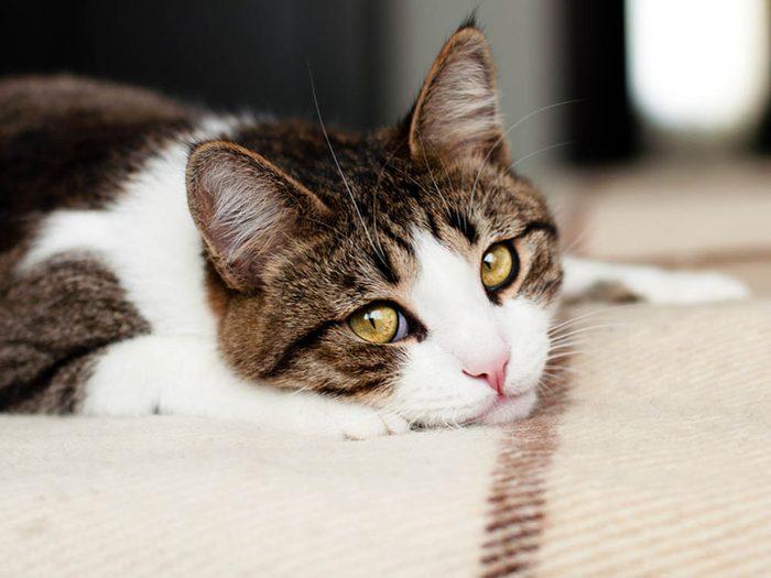 Les signes de déprime chez le chat: il fait ses besoins au mauvais endroits.
