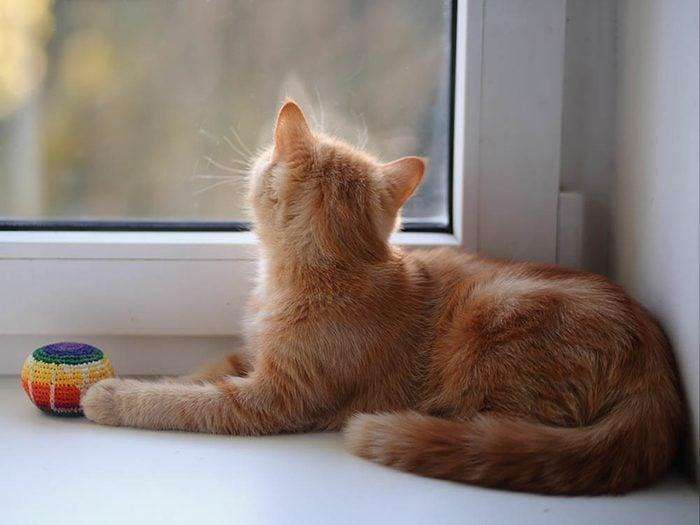 Les signes de déprime chez le chat: il se languit à la fenêtre.