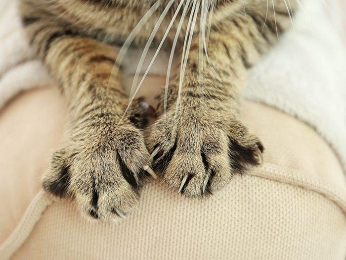 Les signes de déprime chez le chat: des coups de griffes sur votre main.