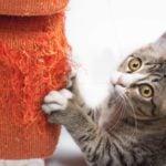 Les signes de déprime chez le chat: il griffe le mobilier.