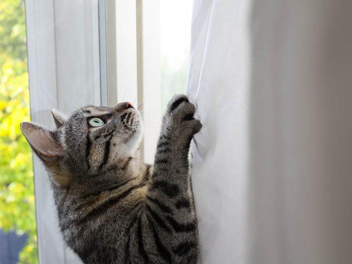Les signes de déprime chez le chat: il grimpe partout.