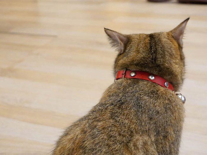 Les signes de déprime chez le chat: il ignore une personne aimée.