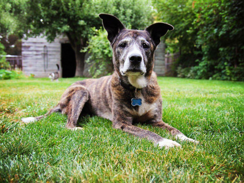 Entretien de la pelouse: pensez à vos animaux de compagnie.