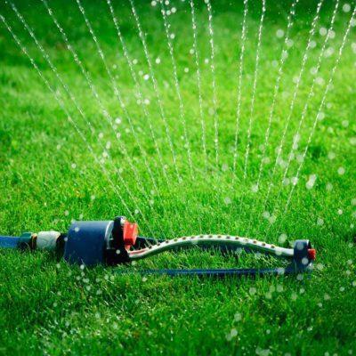 Pour l'entretien de la pelouse: n'arrosez pas trop souvent.