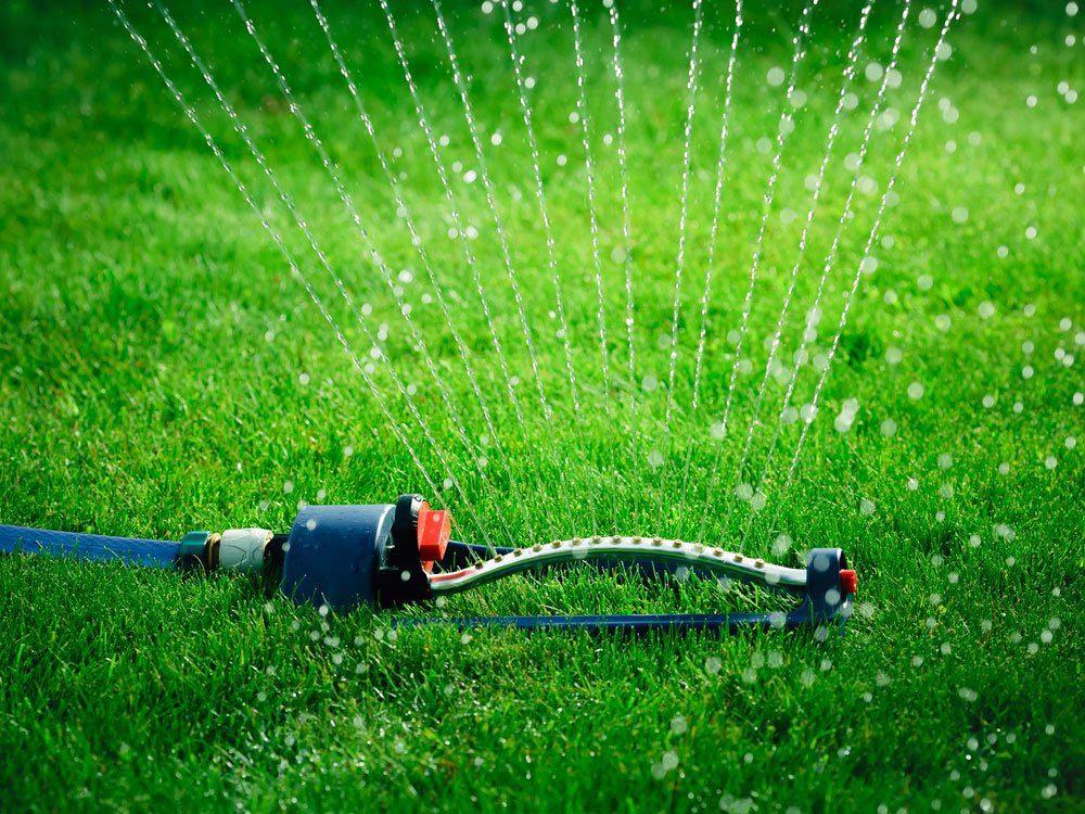 entretien-de-la-pelouse-arrosage