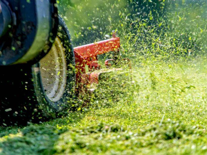 Pour l'entretien de la pelouse: ne coupez pas trop court.