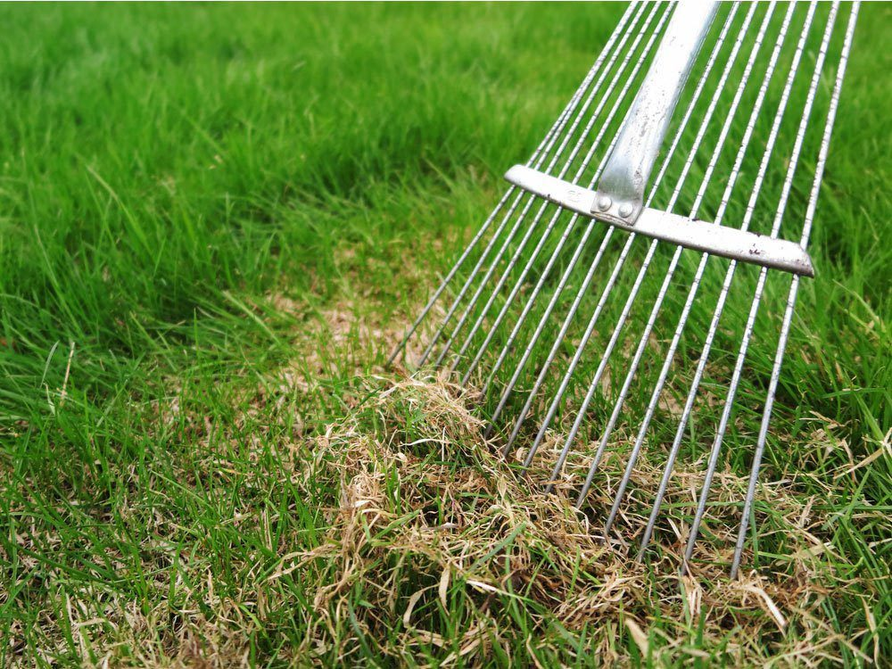 Entretien de la pelouse: n'oubliez pas de déchaumer