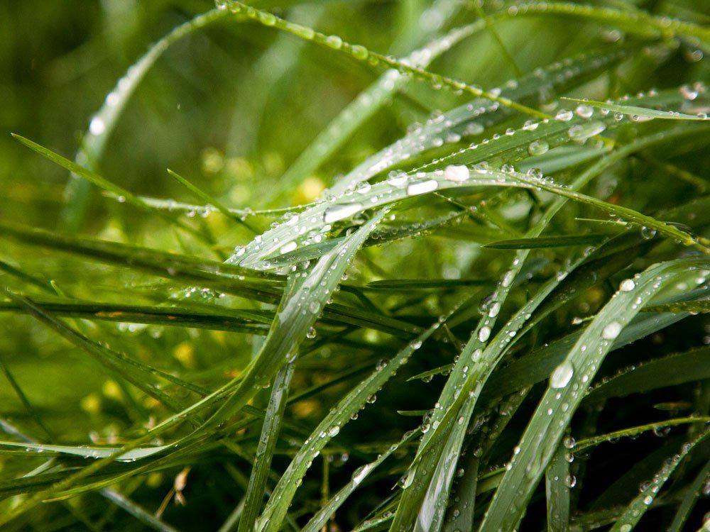 L'entretien de la pelouse ne doit pas se faire sur un terrain humide.