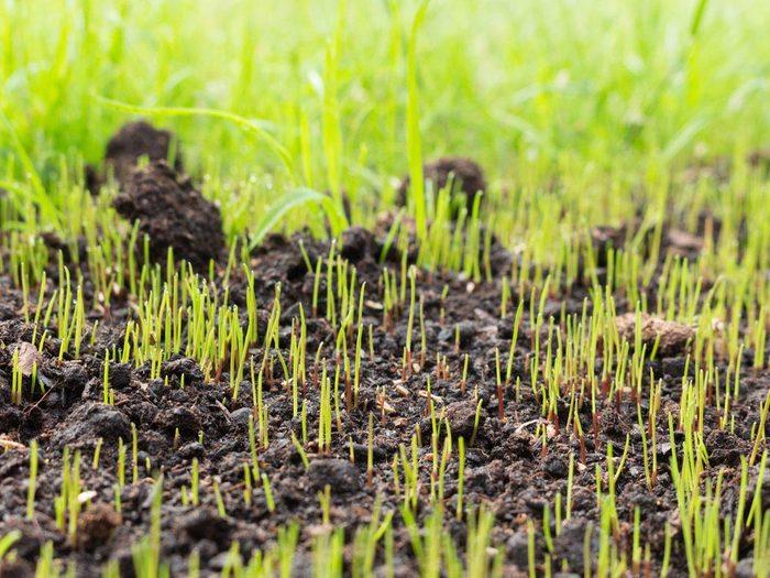 Pour l'entretien de la pelouse: semer de nouveau.
