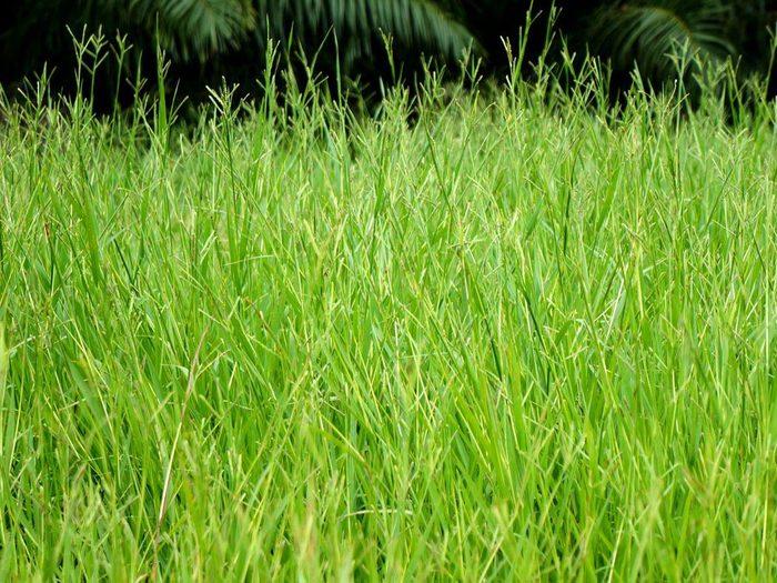 L'entretien de la pelouse doit se faire régulièrement.